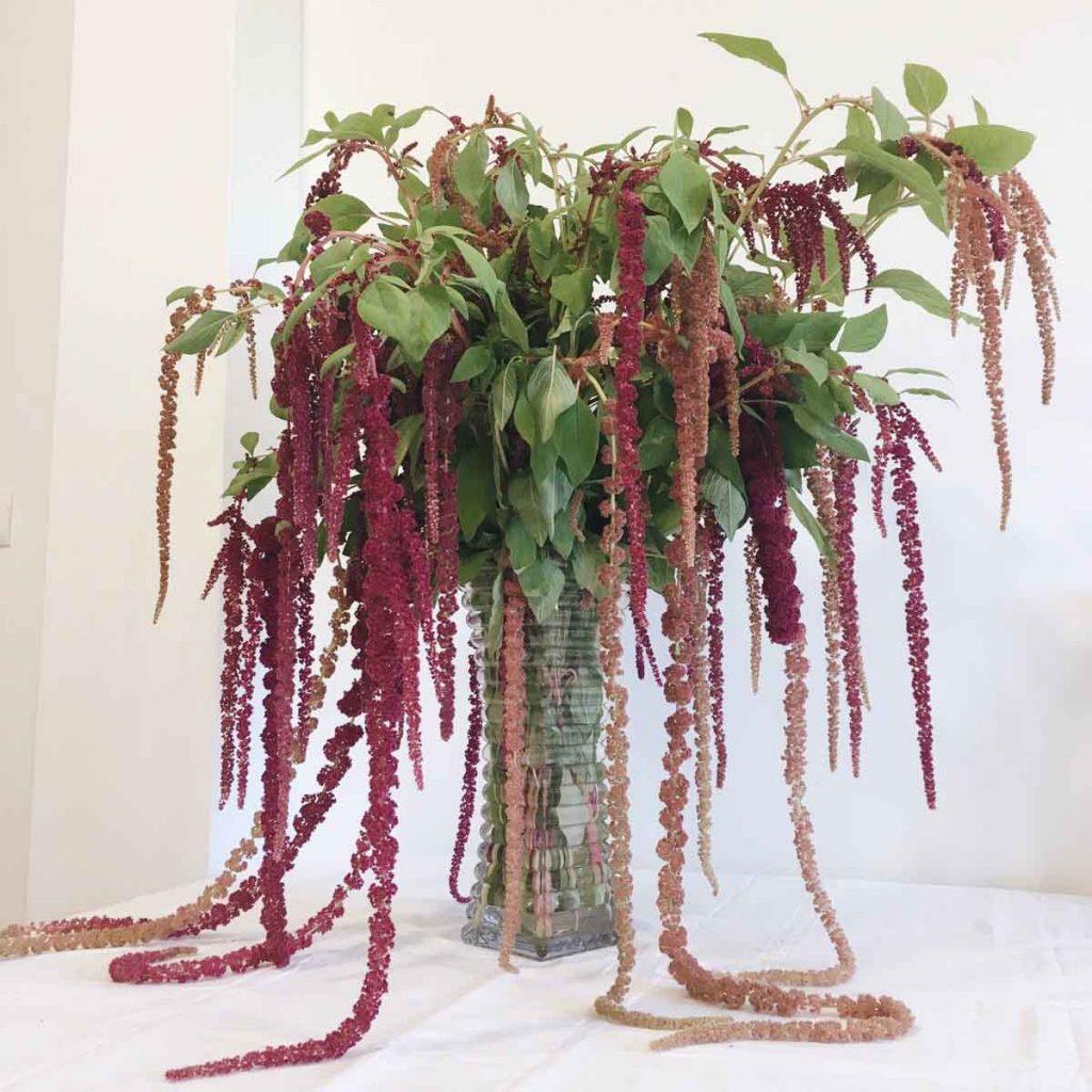 Ramo-flores-amaranto