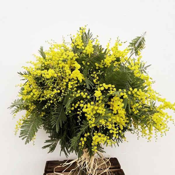 ramo-mimosas