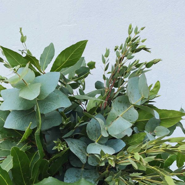ramo-verde-Dafne