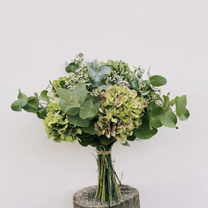 hortensia-blanca-floradeira