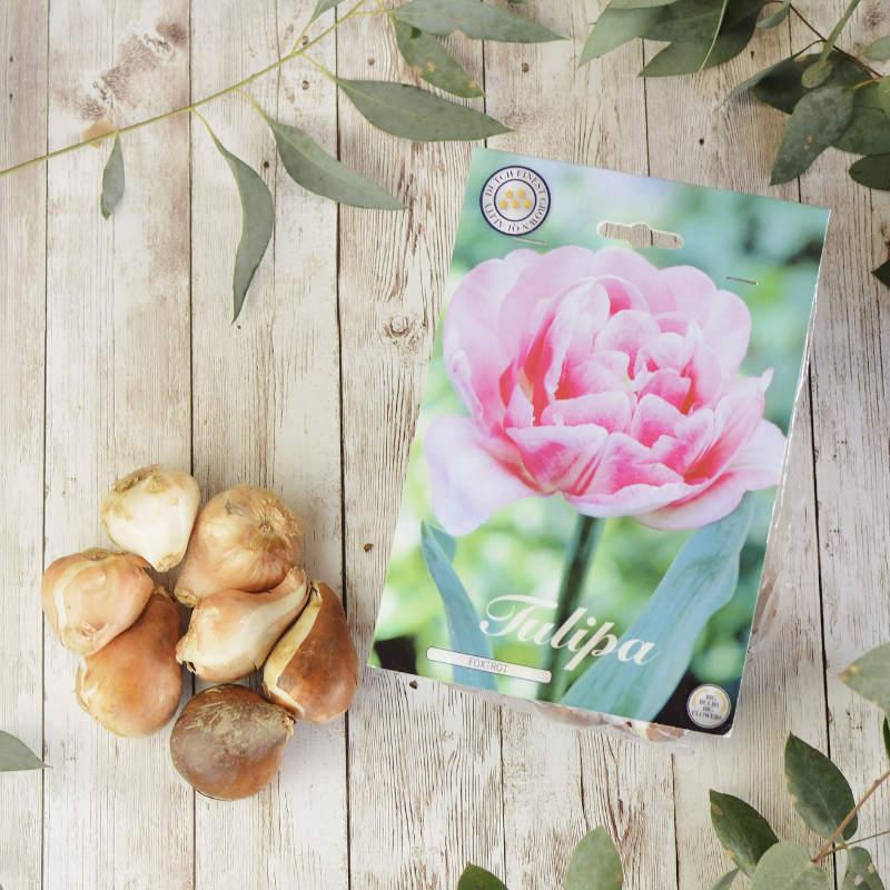 8 tulipanes rosa de pétalo doble (tipo peonía)