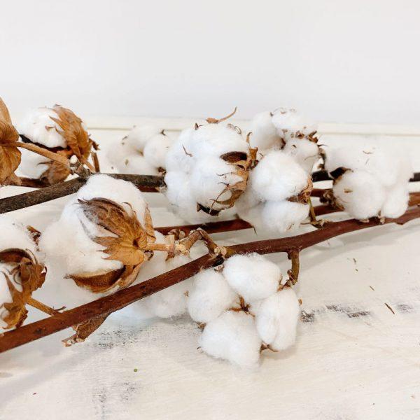 vara de algodón