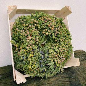 Corona de ciprés con sus frutos, en caja de madera