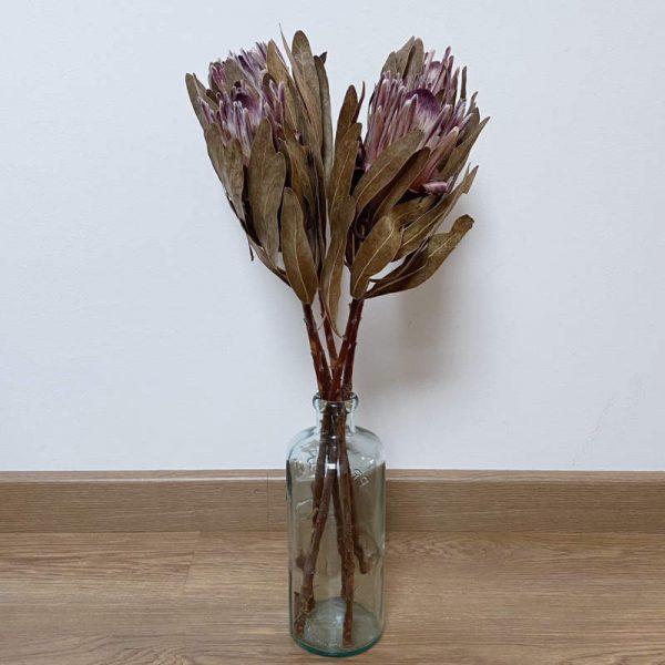 Proteas secas